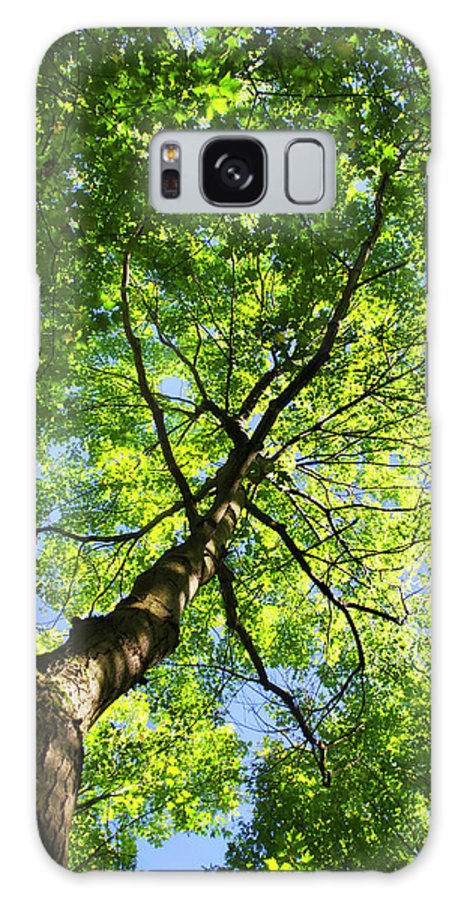 Tree Galaxy S8 Case featuring the photograph Summer Tree Canopy by Christina Rollo