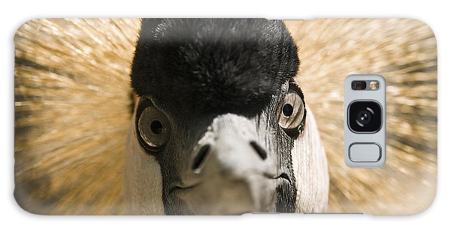 Chad Davis Galaxy S8 Case featuring the photograph Grey Crowned Crane by Chad Davis