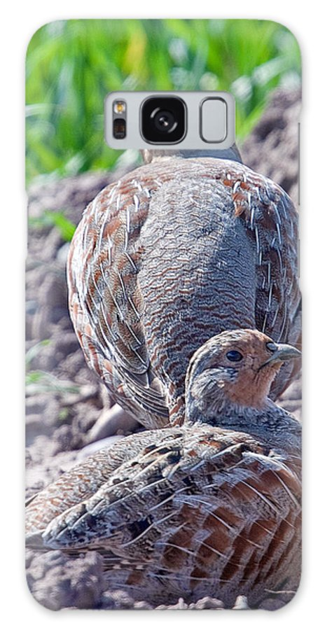 Grey Partridge Galaxy S8 Case featuring the photograph Grey Partridge by Bob Kemp