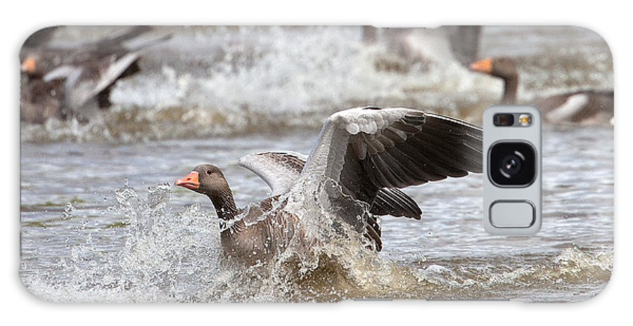 Greylag Galaxy S8 Case featuring the photograph Greylag Goose Landing by Bob Kemp