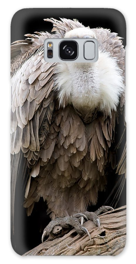 Griffon Galaxy S8 Case featuring the photograph Griffon by Gabriela Insuratelu