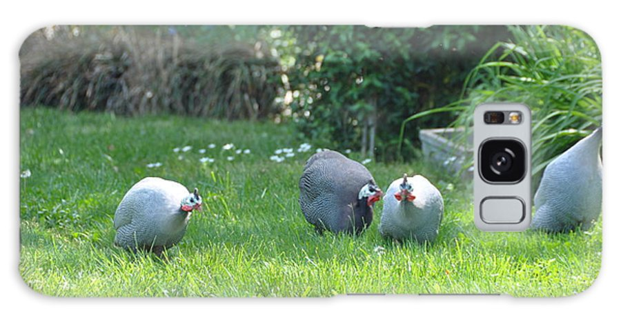 Birds Galaxy S8 Case featuring the photograph Guinea Hens by Jan Amiss Photography