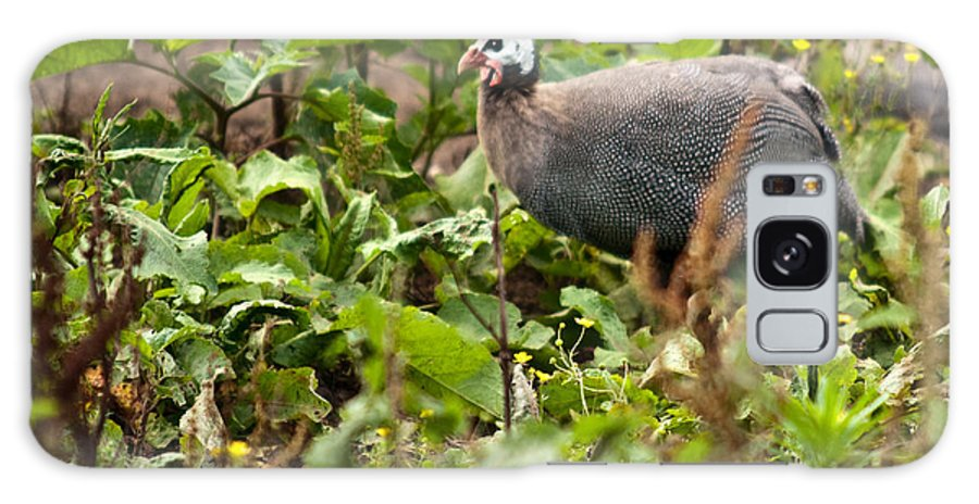 Galliformes Galaxy S8 Case featuring the photograph Guineafowl 3 by Douglas Barnett