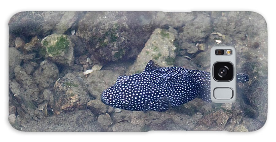 Cabo Galaxy S8 Case featuring the photograph Guineafowl Pufferfish by Deana Glenz