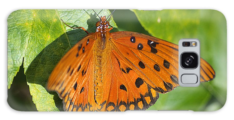 Butterfly Galaxy S8 Case featuring the photograph Gulf Fritillary Butterfly by Kenneth Albin