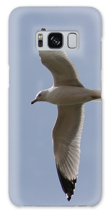 Bird Galaxy S8 Case featuring the photograph Gull 1 by David Dunham