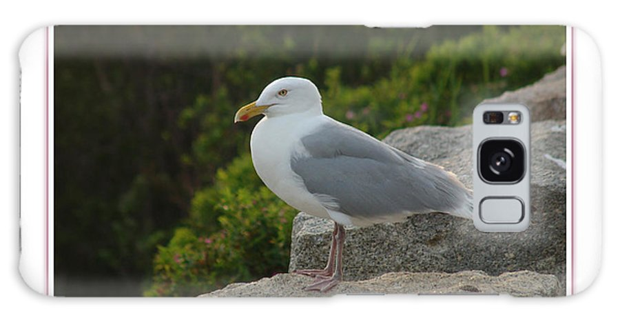 Landscape Galaxy Case featuring the photograph Gull Able by Peter Muzyka