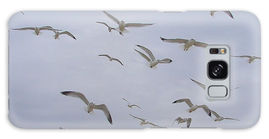 Birds Sky White Galaxy Case featuring the photograph Gulls by Luciana Seymour
