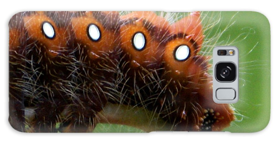 Catepillar Galaxy S8 Case featuring the photograph Hairy Scary by Debbie May