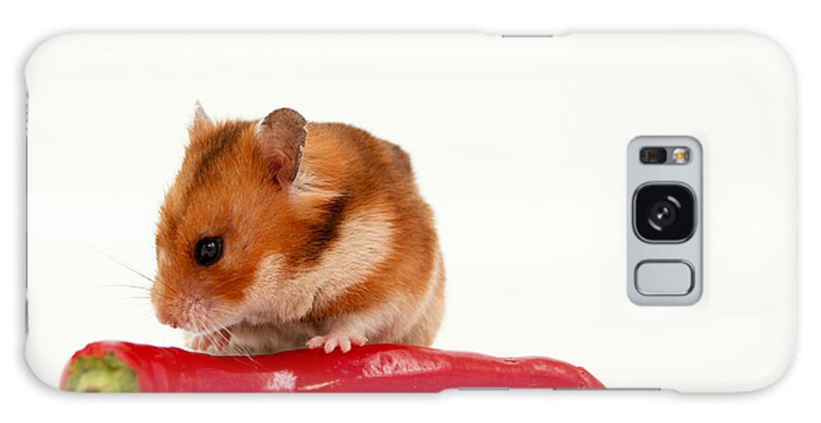 Hamster Galaxy S8 Case featuring the photograph Hamster Eating A Red Hot Pepper by Yedidya yos mizrachi