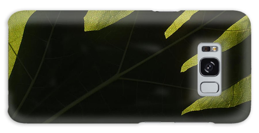 Hand Galaxy Case featuring the photograph Hand And Catalpa Veins Backlit by Anna Lisa Yoder