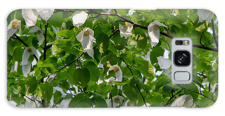 Tree Galaxy S8 Case featuring the photograph Handkerchief Tree by Lise-Lotte Larsson