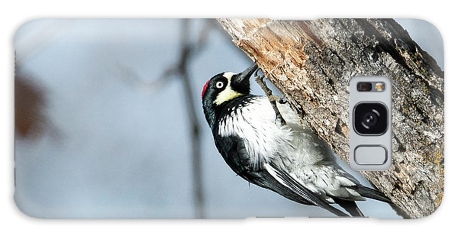 Acorn Woodpecker Galaxy S8 Case featuring the photograph Hang On by Mike Dawson