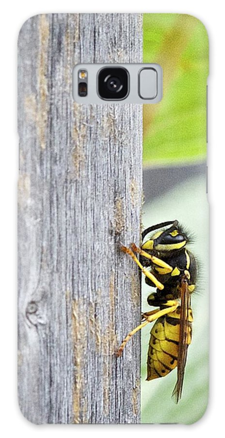 Hanging On Galaxy S8 Case featuring the photograph Hanging On by Robert Skuja