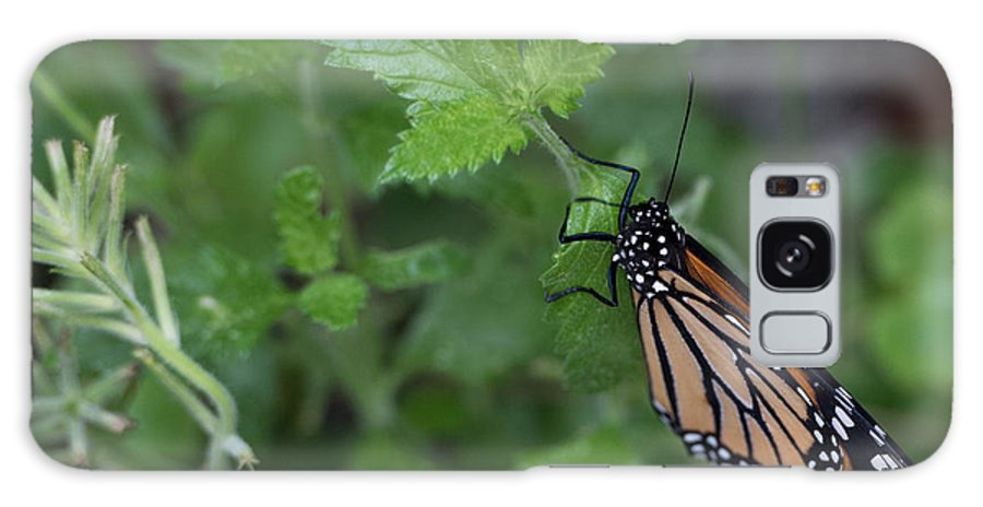 Butterfly Galaxy S8 Case featuring the photograph Hanging On by Wesley Farnsworth