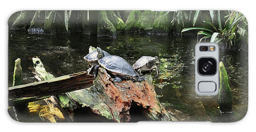 Turtles Galaxy S8 Case featuring the photograph Hanging Out by Colleen Gerlach