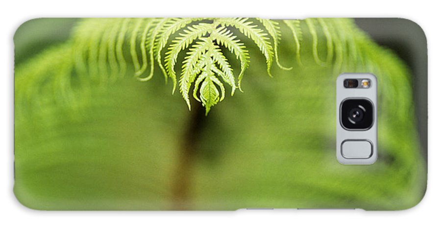 Abstract Galaxy S8 Case featuring the photograph Hapuu Fern by William Waterfall - Printscapes