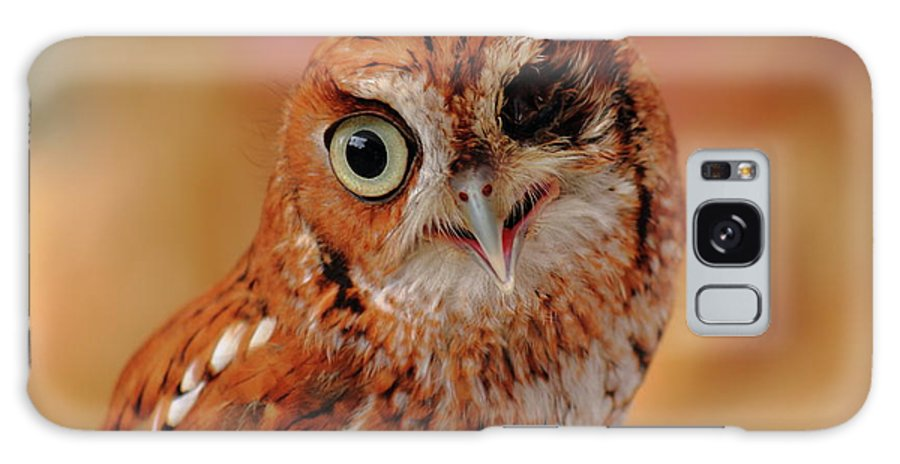Owl Galaxy S8 Case featuring the photograph Harsh by Jamie Smith
