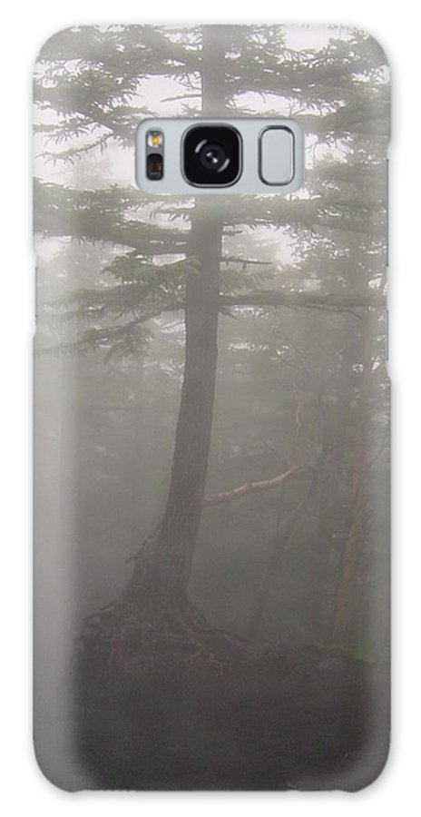 Forrest Galaxy S8 Case featuring the photograph Haunted Forest by D Turner