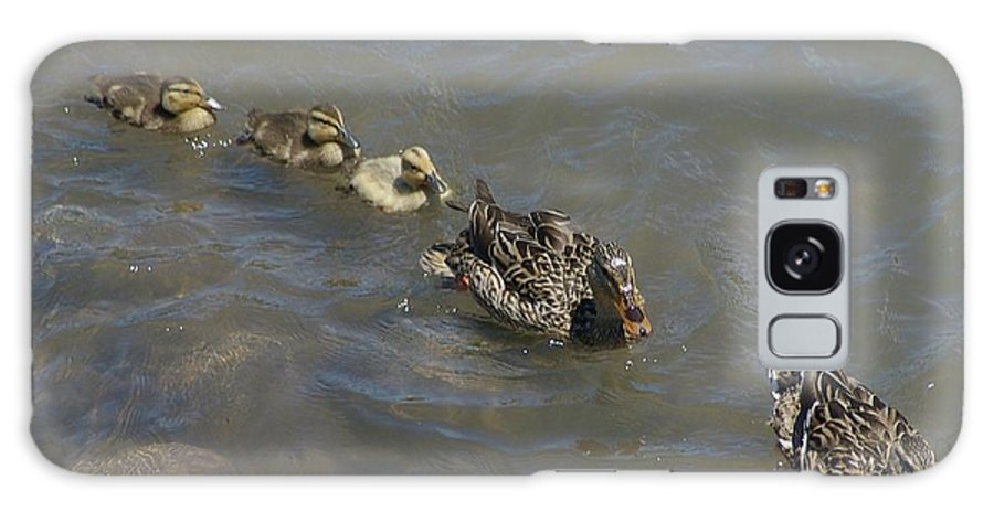Fowl Galaxy S8 Case featuring the photograph Having Your Duckies In A Row by Jeff Swan