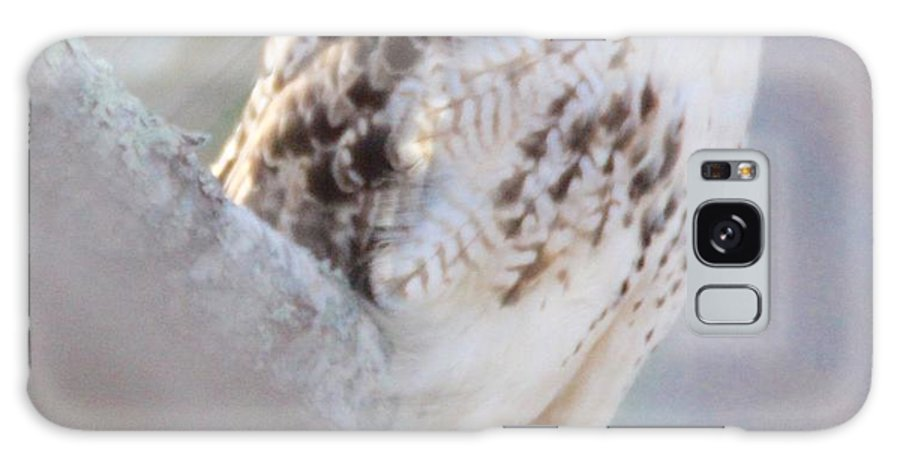 Red-tailed Hawk Galaxy S8 Case featuring the photograph Hawk Eye by Bill Zajac