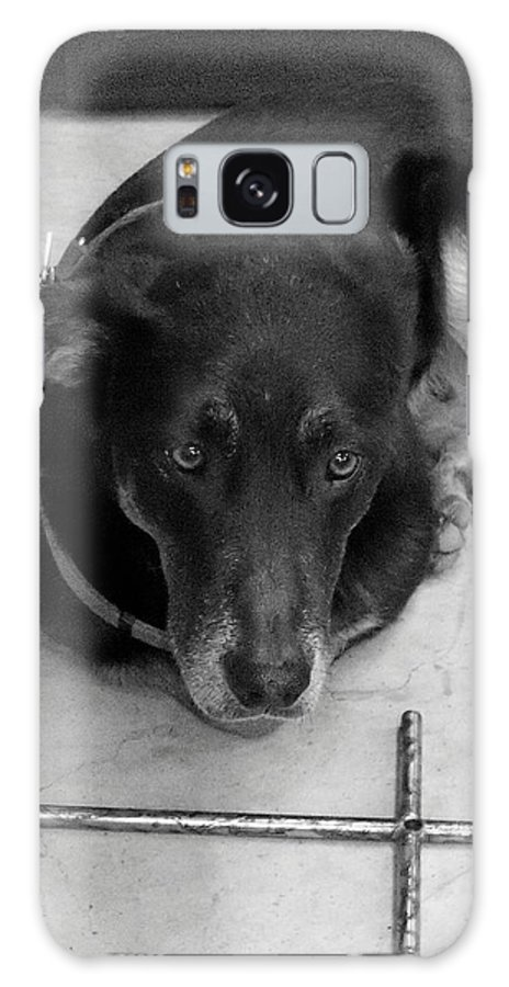 Dog Galaxy S8 Case featuring the photograph He Gets It In Black And White by Deborah Montana