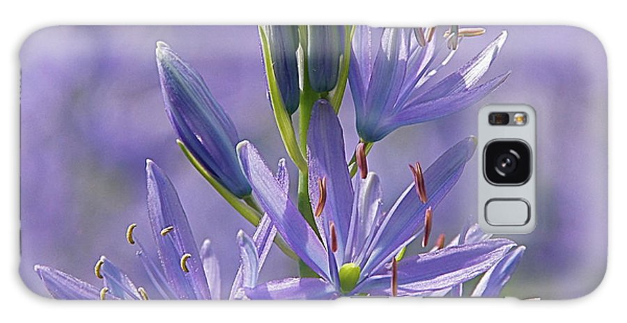 Floral Galaxy S8 Case featuring the photograph Heavenly Blue Camassia by Byron Varvarigos