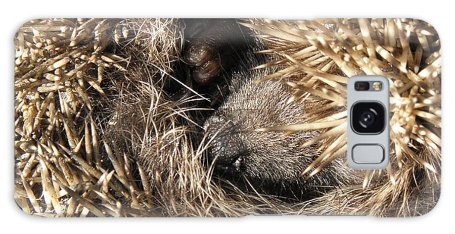 Hedgehog Curled. Background Animal Galaxy S8 Case featuring the photograph Hedgehog Curled Up by Yevhenii Stefaniuk
