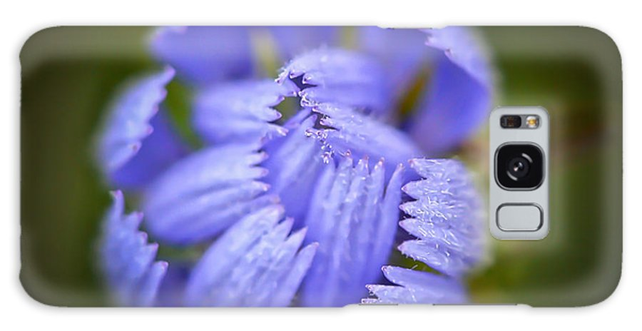 Blue Chicory Wildflower Galaxy S8 Case featuring the photograph Helping Hands by Kerri Farley