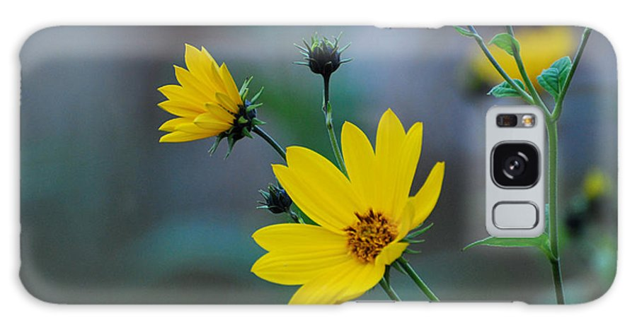Herb Galaxy S8 Case featuring the photograph Herb by Adrian Bud
