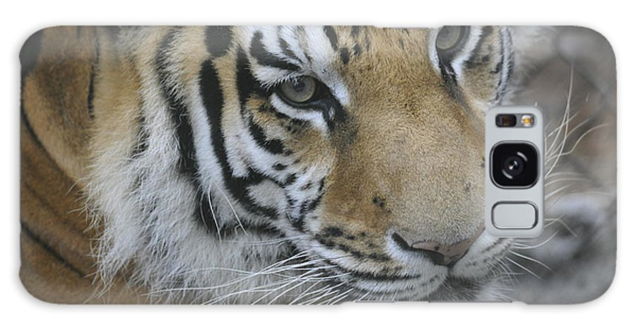 Tiger Galaxy S8 Case featuring the photograph Here Kitty Kitty by Keith Lovejoy
