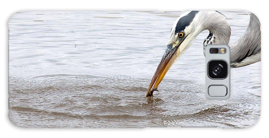 Heron Galaxy S8 Case featuring the photograph Heron Fishing by Bob Kemp