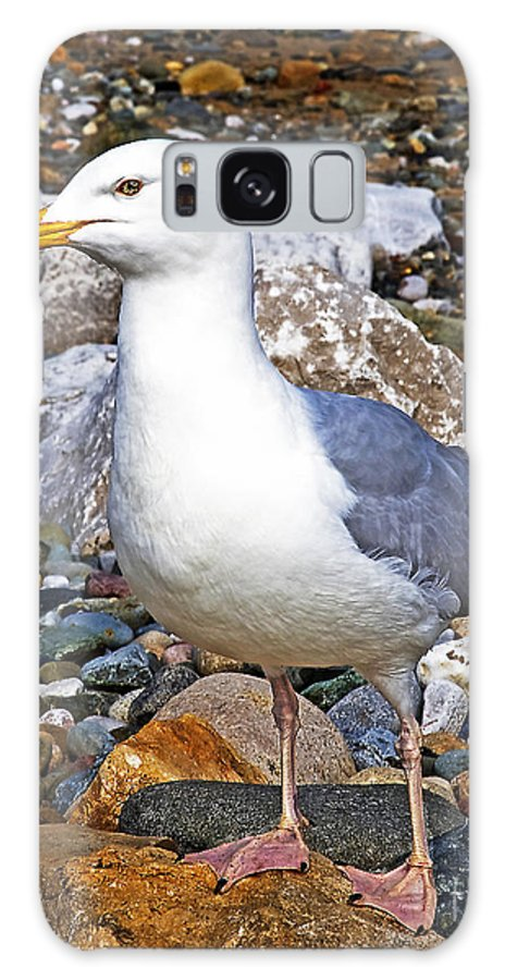 Heron Galaxy S8 Case featuring the photograph Heron Gull by Chris Smith