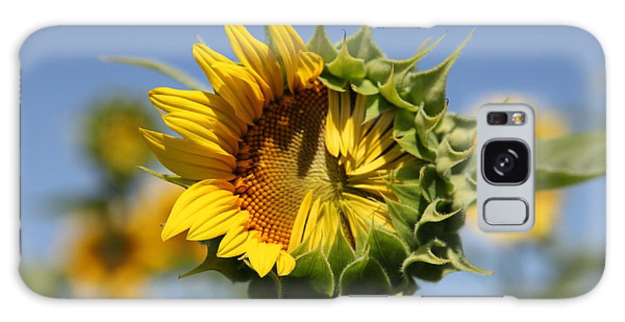Sunflowers Galaxy S8 Case featuring the photograph Hesitant by Amanda Barcon