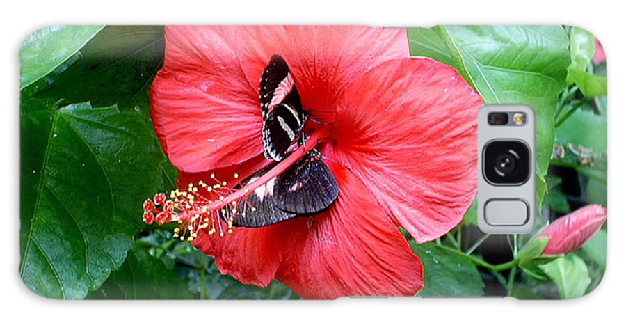 Flora Galaxy S8 Case featuring the photograph Hibiscus And Butterfly Diners by Susan Baker