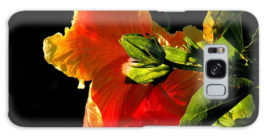 Flowers Galaxy S8 Case featuring the photograph Hibiscus In The Light by Rosalie Scanlon