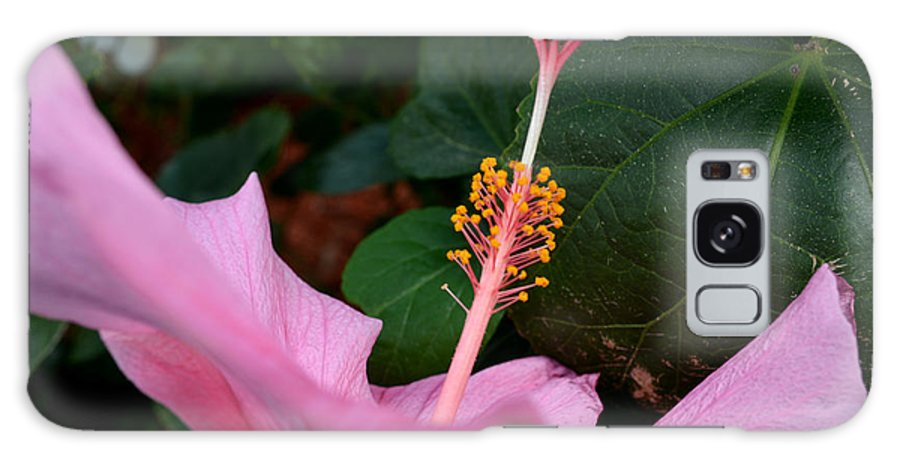 Hibiscus Galaxy S8 Case featuring the photograph Hibiscus Pink Flower by Reva Steenbergen