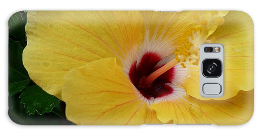 Floral Galaxy S8 Case featuring the photograph Hibiscus Yellow by Florene Welebny