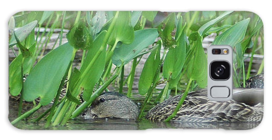 Ducks Galaxy S8 Case featuring the photograph Hiding In The Weeds by Steve Cost