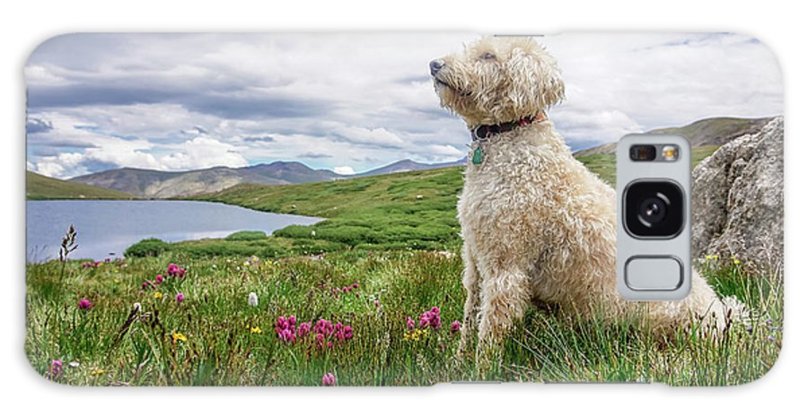 Labradoodle Galaxy S8 Case featuring the photograph High Meadow With Eyes To The Sky by Cary Leppert