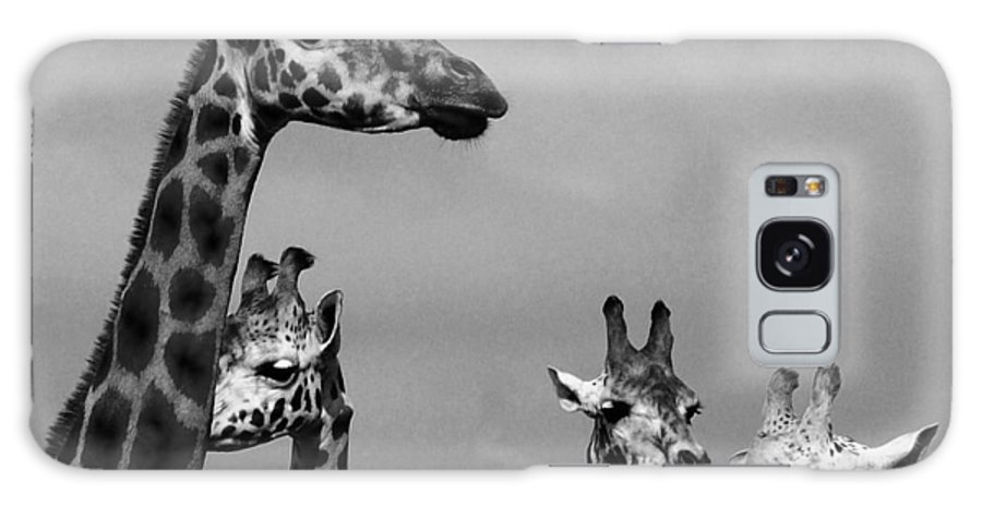 Giraffes Galaxy S8 Case featuring the photograph High Rise Chat by Martina Fagan