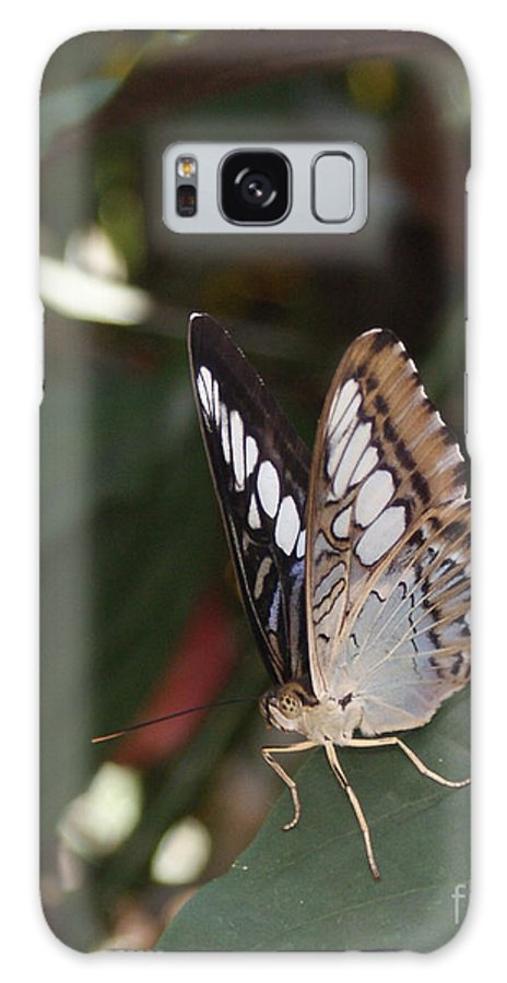Butterfly Galaxy S8 Case featuring the photograph Hints Of Blue by Shelley Jones