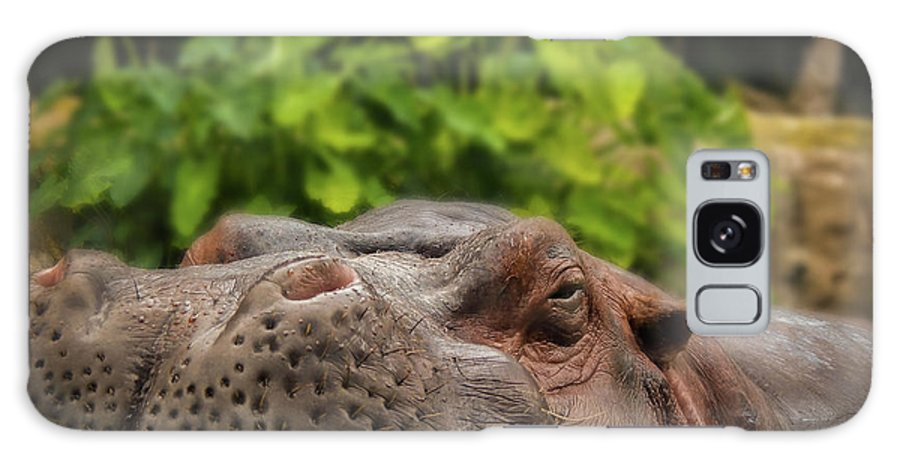 Hippo Galaxy S8 Case featuring the photograph Hippo by Kristie Ferrick