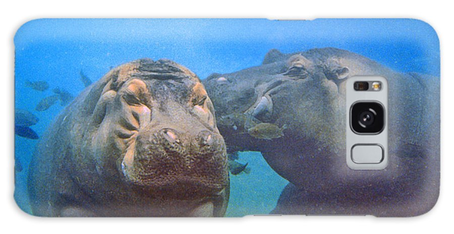 Animals Galaxy Case featuring the photograph Hippos In Love by Steve Karol