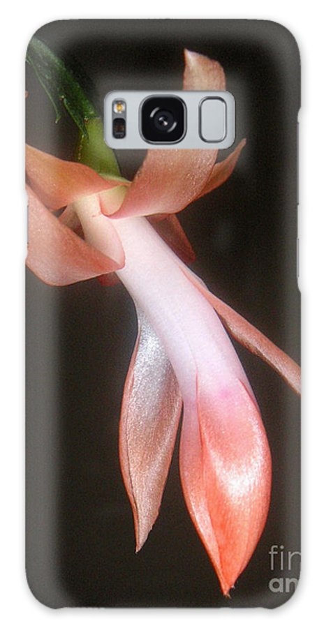 Nature Galaxy Case featuring the photograph Holiday Cactus - In Night Light by Lucyna A M Green