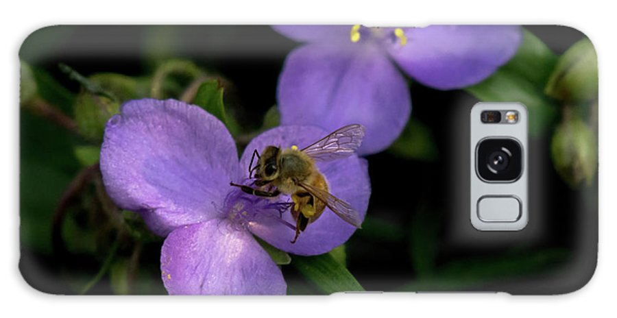 Bee Honey Pollinator Flower Insect Spiderwort Galaxy S8 Case featuring the photograph Honey Hunter by Phillip Beyser