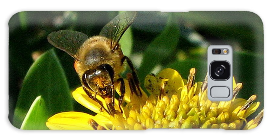 Bee Galaxy S8 Case featuring the photograph Honey Starts Here by T Guy Spencer