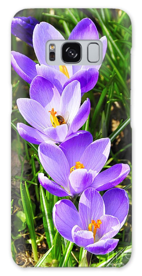 Crocus Galaxy S8 Case featuring the photograph Honeybee Working Crocus by Thomas R Fletcher