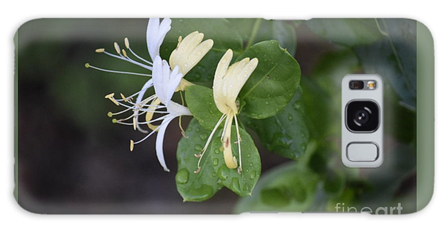 Honeysuckle Galaxy S8 Case featuring the photograph Honeysuckle by Anita Goel