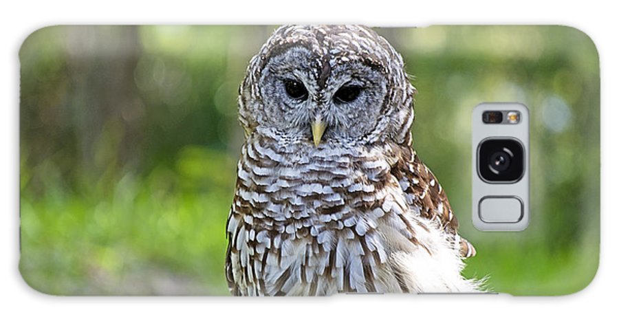 Owl Galaxy S8 Case featuring the photograph Hoo Are You by Kenneth Albin